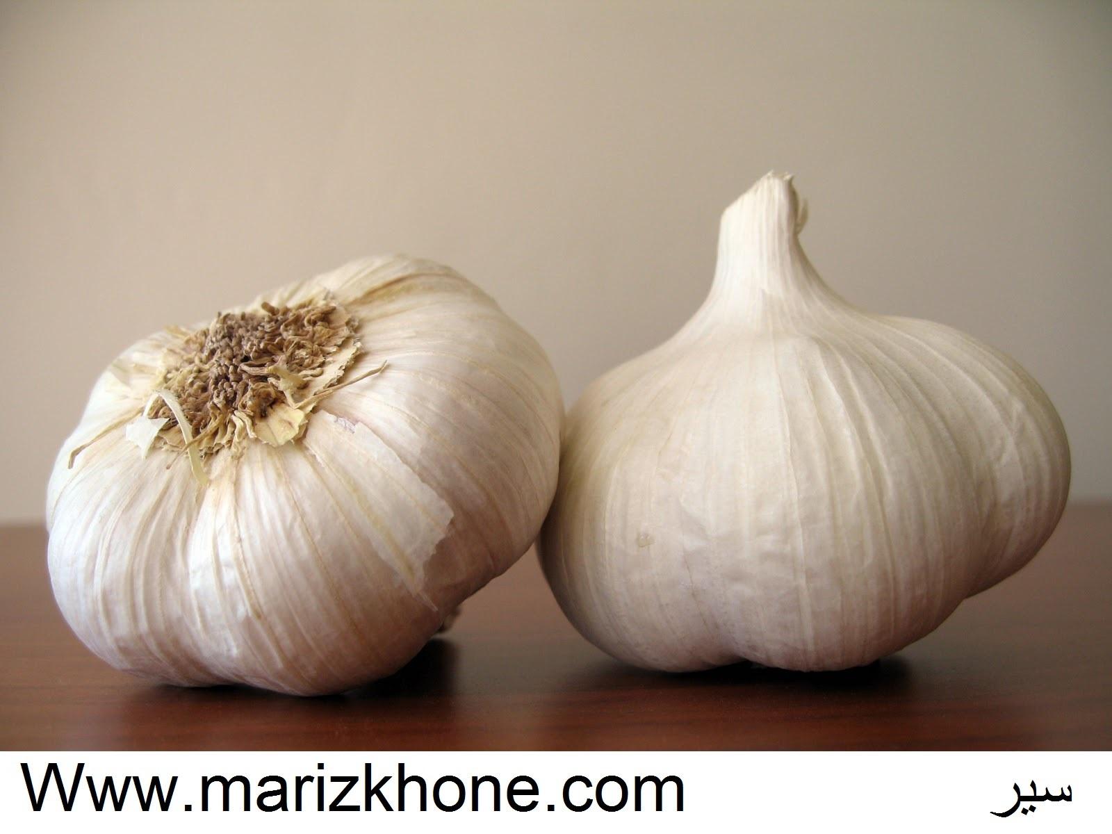 سیر،liliaceae،Allium sativum L،Garlic،Www.marizkhone.com،وبسایت تخصصی اطلاعات پزشکی5