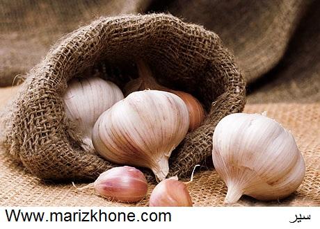 سیر،liliaceae،Allium sativum L،Garlic،Www.marizkhone.com،وبسایت تخصصی اطلاعات پزشکی6